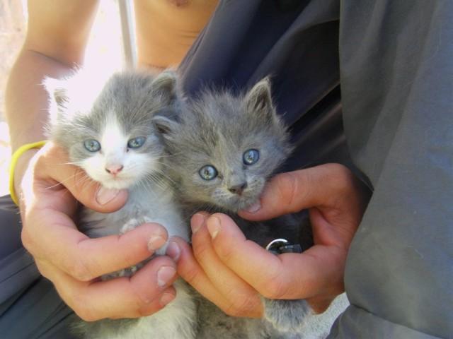 Adopci n gatos acoge adopta apadrina anima tu for Ahuyentar gatos de mi jardin