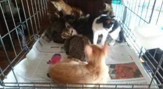 9 gatitos en una caja.1