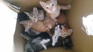 9 gatitos en una caja